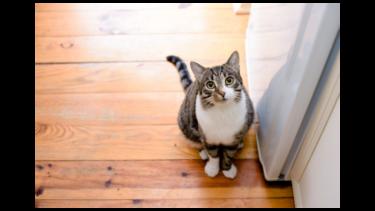 【自宅でストレッチも】猫背を改善。人生初整体に通ってみた。