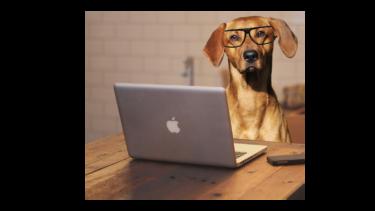 【在宅で副業ができる】doghuggyの始め方